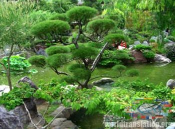 Garden in the Japanese style