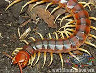 паразиты черного цвета в организме человека
